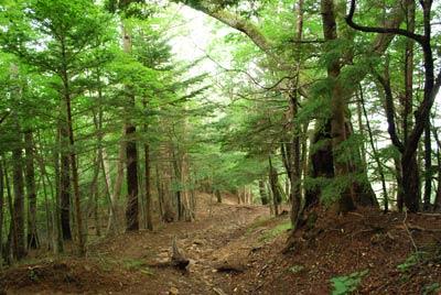 登り始めの森
