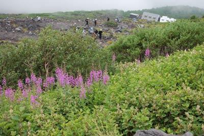 斜面に咲くピンクの花