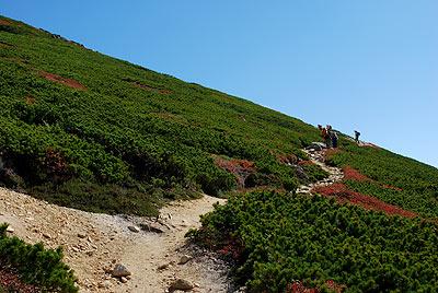鮮やかなハイマツの緑と赤く紅葉した草の道
