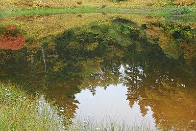 湖面に紅葉が映る