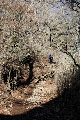 木の生い茂った登山道
