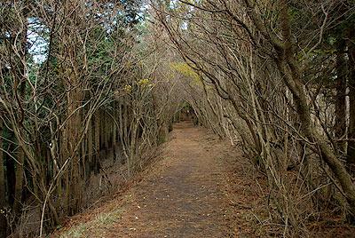 木のアーチ。雷の峰尾根